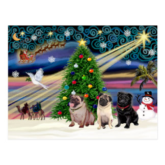 Christmas Magic Pugs (three, 2 fawn, 1 black) Postcard