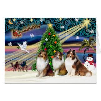 Christmas Magic Shetland Sheepdogs (3 Sable) Card