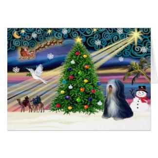 Christmas Magic Tibetan Terrier (black-white) Greeting Card