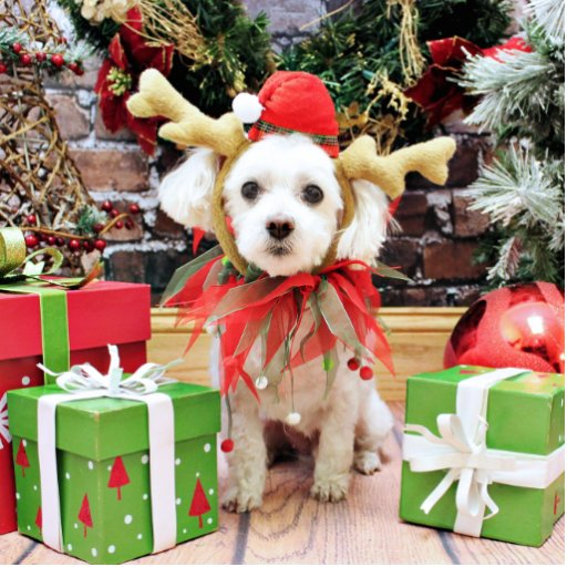 Christmas - Maltese - Sweetie Photo Cut Out
