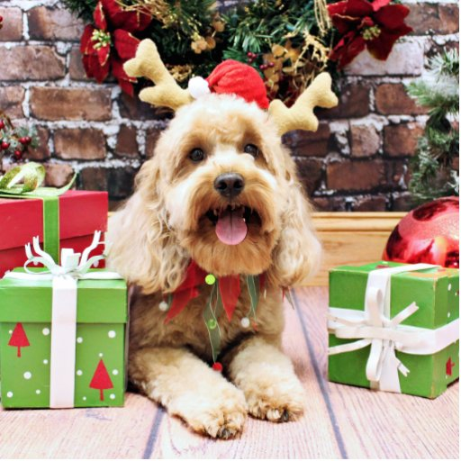 Christmas - Mini GoldenDoodle - Maggie Acrylic Cut Out