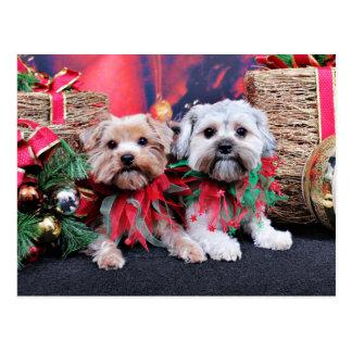 Christmas - Morkie - Jackie and Tabby Postcard