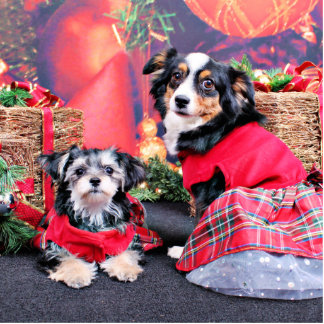 Christmas - Morkie - Lucy and Mini Aussie - Sophie Photo Sculptures