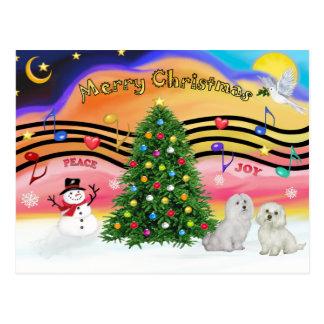 Christmas Music 2 - Maltese (two) Postcard
