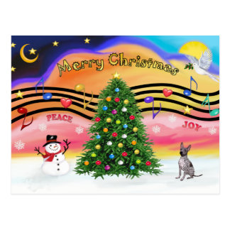 Christmas Music - American Hairless Terrier - Postcard