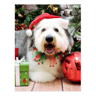 Christmas - Old English Sheepdog - Alphy Post Card