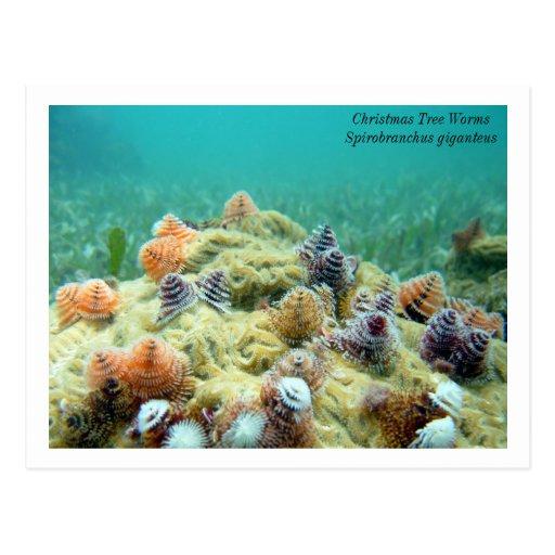Christmas on the Sea Floor Post Cards
