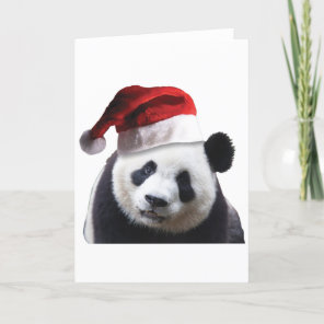 Christmas Panda Bear Holiday Card