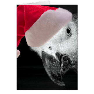 Christmas Parrot Card