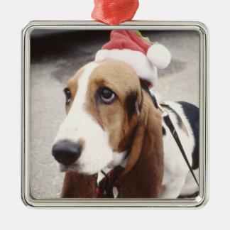 Christmas Pet Photo  Holidays Xmas Christmas Ornament