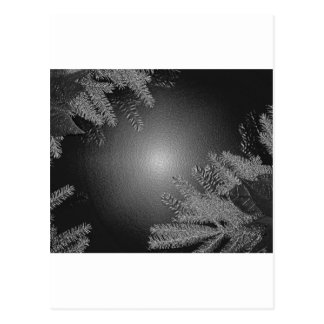 Christmas Poinsettia Black And Grey Post Cards