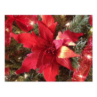 Christmas Poinsettia Flower Post Card