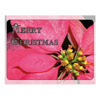 Christmas Poinsettia Postcard