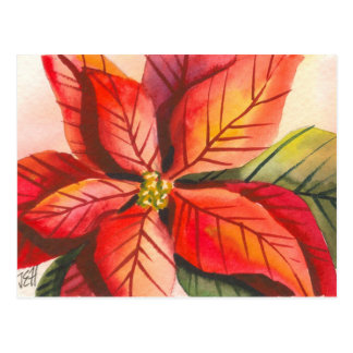 Christmas Poinsettia Postcard