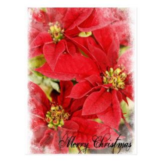 Christmas Poinsettia Postcards
