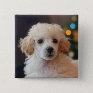 Christmas poodle puppy Button