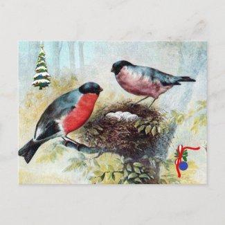 Christmas  Postcard - Bullfinches