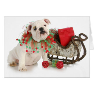 Christmas Puppy - English Bulldog Puppy Sitting Card