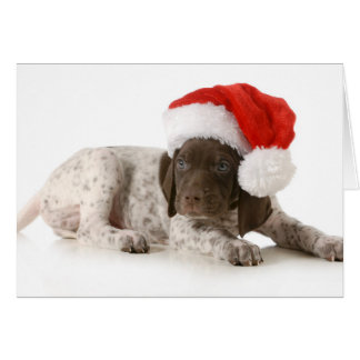 Christmas Puppy - German Shorthaired Pointer Card