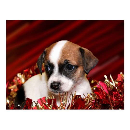 Christmas puppy postcard