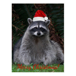 Christmas Raccoon Photo Holiday Postcard