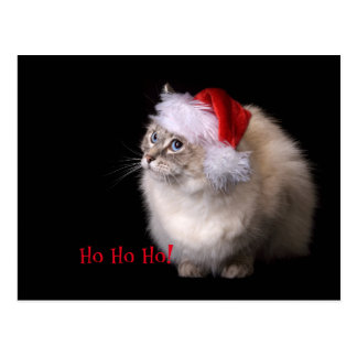 Christmas Ragdoll Cat Postcard