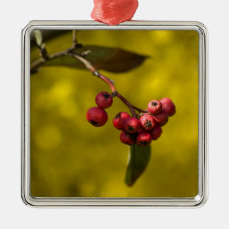 Christmas Red Berries Silver-Colored Square Decoration