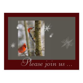 Christmas Red Grey Birds Cardinal Wood Pecker Postcard