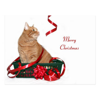 Christmas ribbon kitty post cards