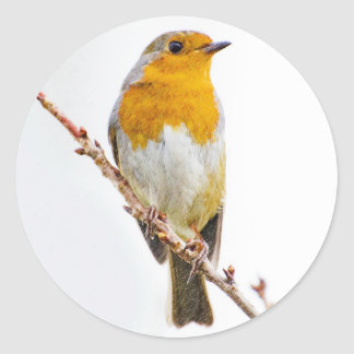 Christmas Robin on a Twig. Classic Round Sticker