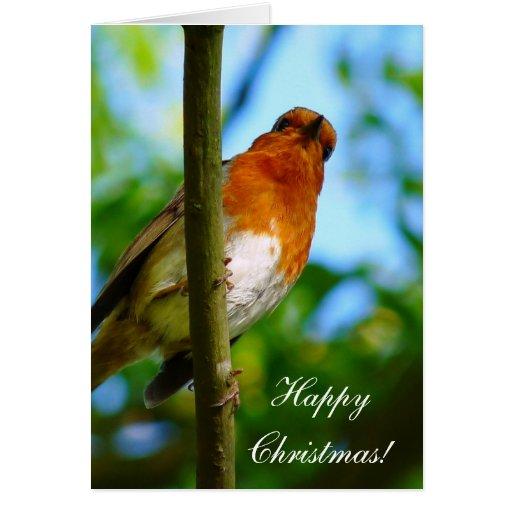 CHRISTMAS ROBINS CARDS