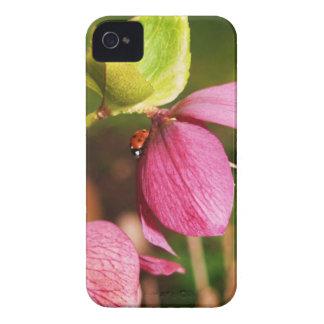 Christmas Rose Flower Iphone 4 Case
