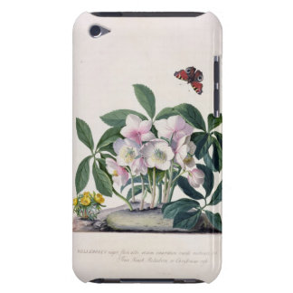 Christmas Rose (Helleborus niger) and Winter Aconi iPod Touch Covers