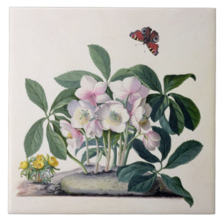 Christmas Rose (Helleborus niger) and Winter Aconi Tile