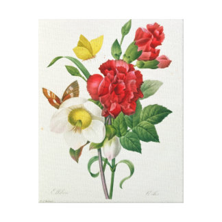 Christmas Rose, Helleborus niger Canvas Print