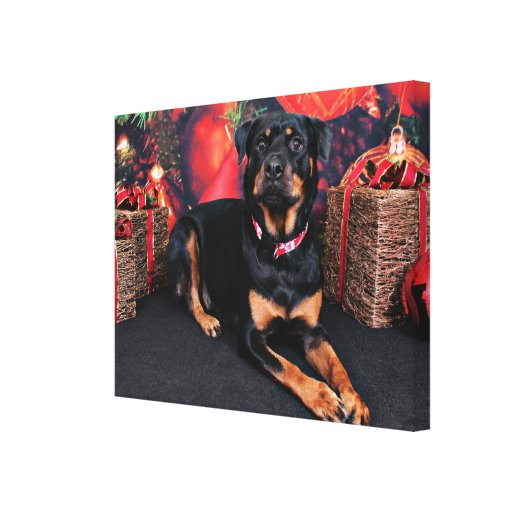 Christmas - Rottweiler - Nalani Stretched Canvas Print
