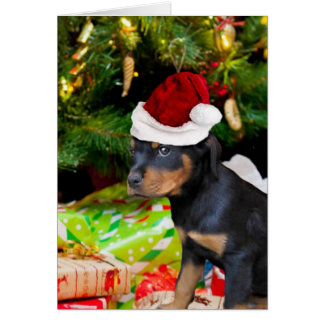 Christmas Rottweiler puppy Card