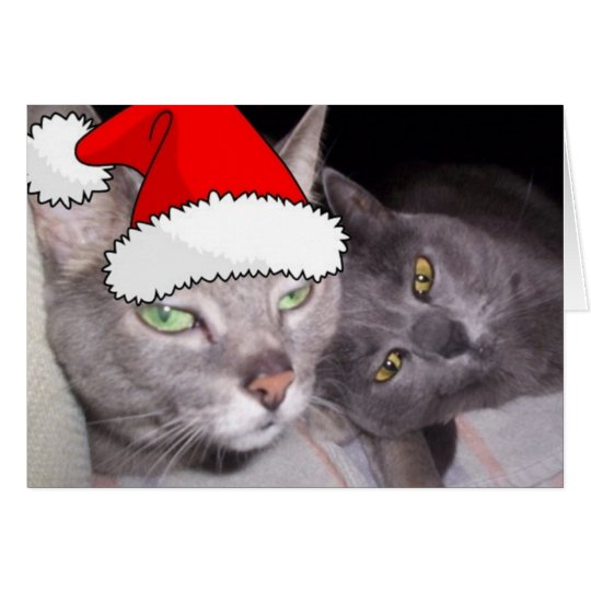 Christmas Russian Blue Grey Cats Card