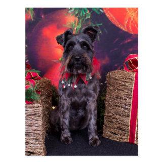 Christmas - Schnauzer - Sophie Postcard
