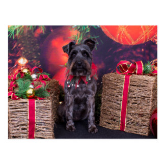 Christmas - Schnauzer - Sophie Postcards