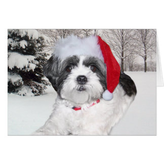 Christmas Shih Tzu Greeting Card