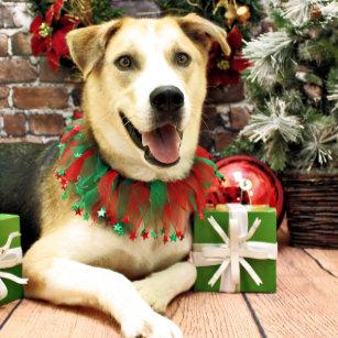 christmas siberian husky x harley christmas ornament