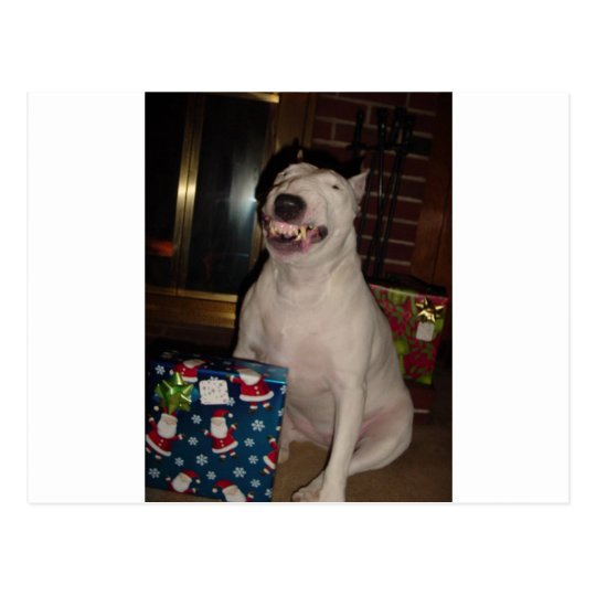 christmas smile bull terrier postcard