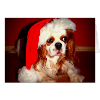 Christmas Spaniel Card