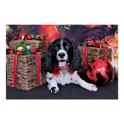 Christmas - Springer - Lucy Poster