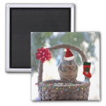 Christmas Squirrel in Snowy Basket Magnet