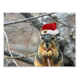 Christmas Squirrel Photo