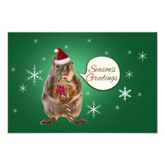 Christmas Squirrel with Snowflakes Photograph