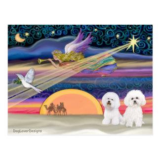 Christmas Star - Bichon Frise (two) Postcard