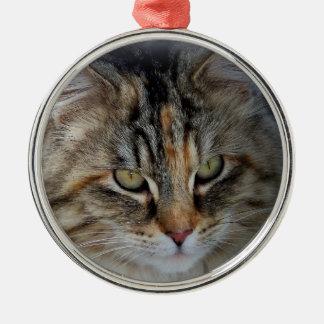 Christmas Tabby Feral Cat Potrait Christmas Ornament